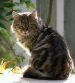 Ммммммм.... Здравей, коте! ; comments:14