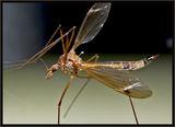 Комарче ; comments:52