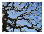 За небето и дърветата ; comments:93