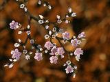 Цветята на степта - ІІІ ; comments:53