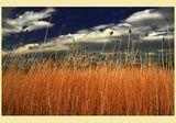 Огнено поле! ; comments:55