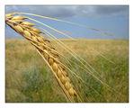 Хлябът, който ни храни ; comments:65