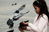 Дете храни гълъбите на площада в Краков ; comments:56