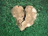 Сърцето на природата ; comments:57