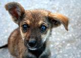 Улично кученце ; comments:34