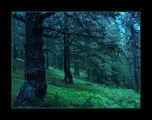 Омагьосаната гора ; comments:32