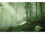 Омагьосаната гора ; comments:63
