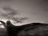Идвам с нощта на крилете си ... ; comments:63