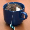 Хочу чай ; comments:25