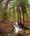 Пиринска гора 2 ; comments:26