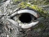 гледа те ; comments:33