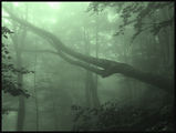 Misty Wood 1 ; comments:55