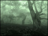 Misty Wood 2 ; comments:55