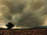 поле,облаци,самотно дърво и малко градче! ; comments:58