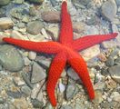 StarFish ; comments:13