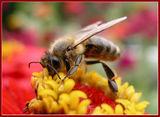 Пчеличка ; comments:30