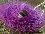 банална пчеличка ; comments:7