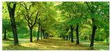 Пътят към рая ; comments:69