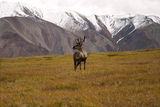 Denali National Park/Alaska ; comments:50