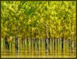 Реката в гората ; comments:46