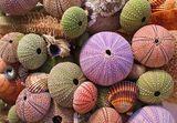 Sea Shells 4.0 ; comments:25