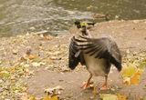 Есен в Зоопарк Варна 2 ; comments:66