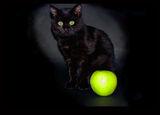 Натюрморт с Ябълка и Котка..... ; comments:20