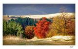 Есенна палитра.... ; comments:85