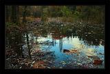 Езерото на чудесата ; comments:47