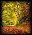 разходка в есента ; comments:78