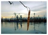 Silent Autumn ; comments:32