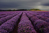 Deepest Purple II ; comments:138
