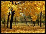 Есен*златокрила ; comments:91