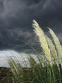 storm ; comments:37