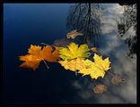 Синьо небе...  мъртви листа.... ; comments:102