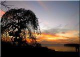 Моето любимо дърво в парка на фона на залеза ; comments:83
