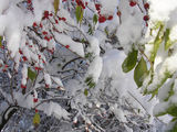 Вече наистина е зима 2 ; comments:72