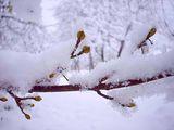 Зимен сън... ; comments:84