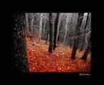 Magic woods ; comments:51