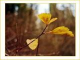 Есенно злато в декемврийския следобед ; comments:42