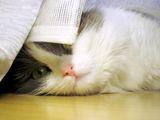 Капи-мързелива котка ; comments:19