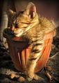 Расло котенце в саксия... ; comments:94