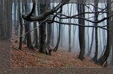 есенна мъгла ; Comments:63