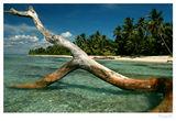 Карибски мечти ; comments:77