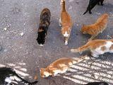 Всяка котка със своя път и посока... ; comments:12