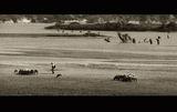Овчар и стадо- Източни Родопи ; comments:41