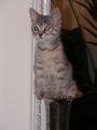 Коте във ваза 2 ; comments:45