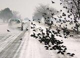 Зима, глад, птичи грип... ; comments:46