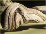 красотата на дървото 1 ; Comments:24