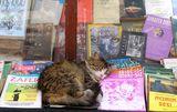 чело коте книжки... ; comments:24